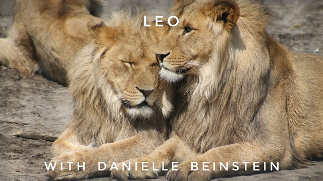 Leo: Danielle Beinstein
