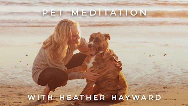 Pet Meditation: Heather Hayward