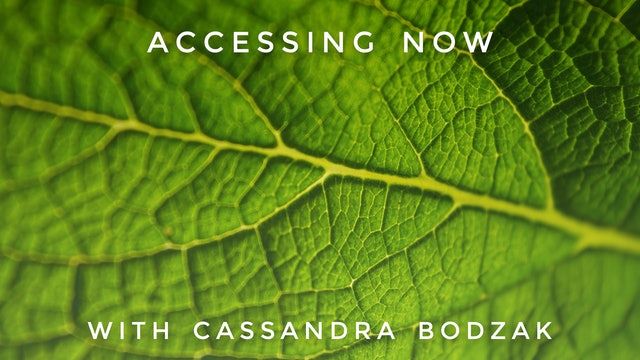 Accessing Now: Cassandra Bodzak