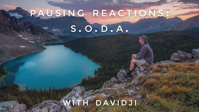Pausing Reactions S.O.D.A: davidji