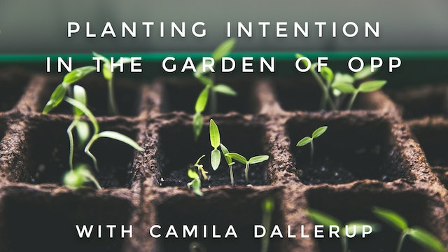 Planting Intention In The Garden Of Opportunity: Camilla Sacre-Dallerup