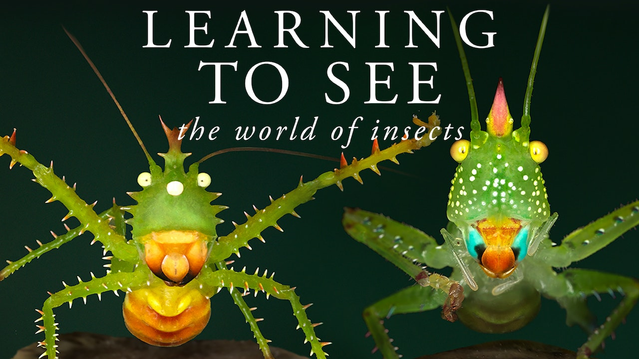 Learning To See: The World of Insects