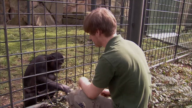 Zoo Juniors: 108