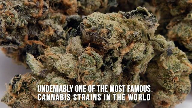 The 7 Strongest Cannabis Strains On E...
