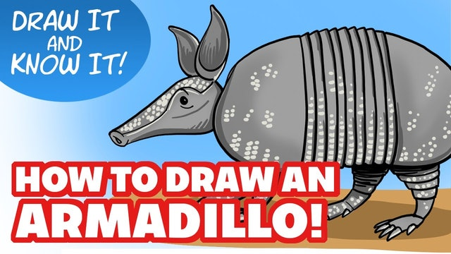 Draw It And Know It - Art Lesson Edition - How To Draw An Armadillo