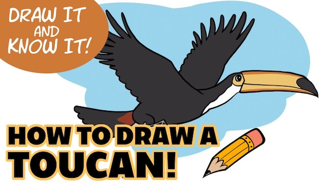 Draw It And Know It - Art Lesson Edition - How To Draw A Toucan