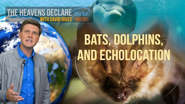 Echolocation - How Dolphins And Bats Navigate