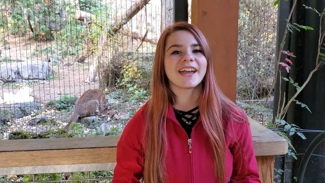Gorilla Zoo Minute