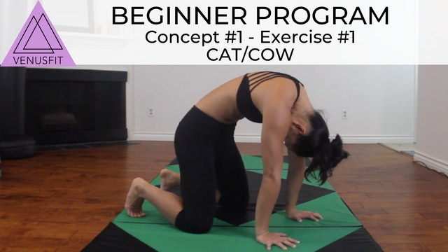 Beginner Program - Concept #1: Exercise #1 Cat/Cow