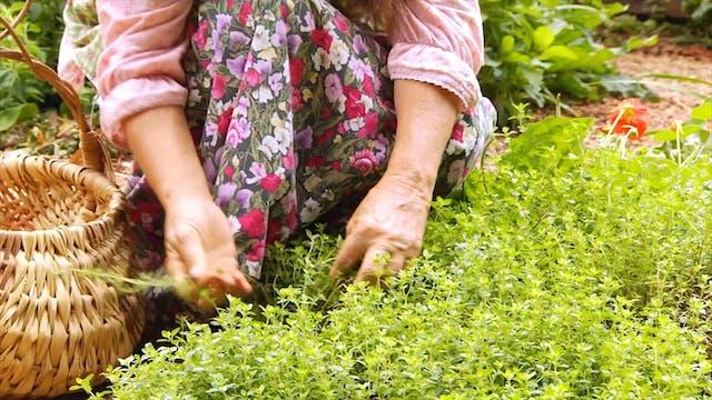 Homestead Blessings - The Art of Herbs