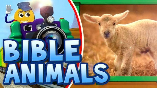 Real Bible Animals
