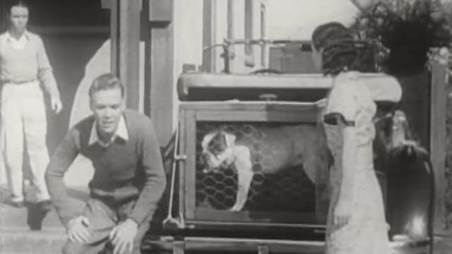 Shirley Temple - Pardon My Pups