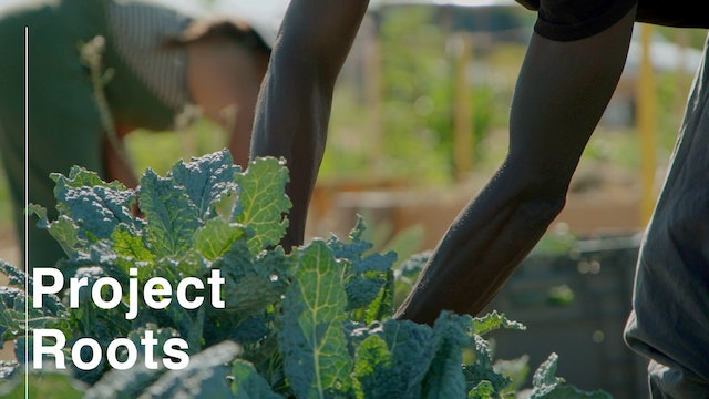 Leading in the Moment: Project Roots