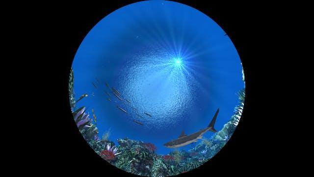 Stars to Starfish Full Dome Planetarium Program