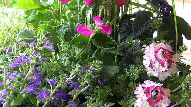 Ornamental Container Gardening with Maureen Murphy