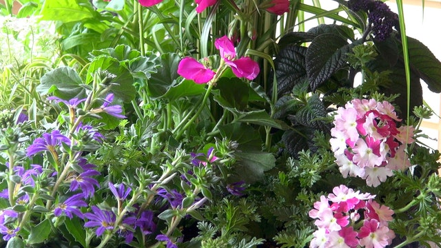 Ornamental Container Gardening with M...