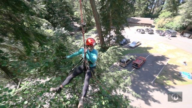 Curious Islander - Canopy Tree Climbing