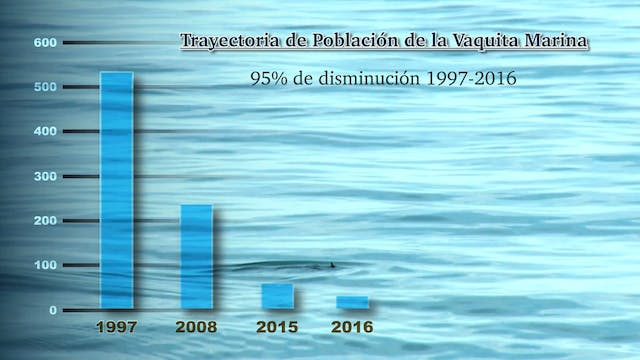 Souls OF The Vermilion Sea - Searching for the Vaquita- Spanish Update
