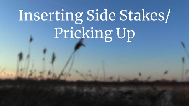 Inserting side stakes & pricking up