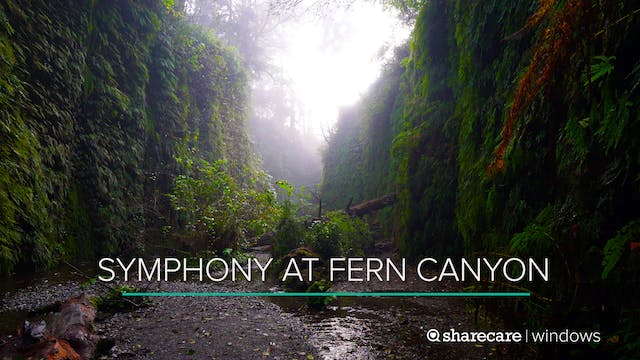 20 Minutes of Symphony at Fern Canyon