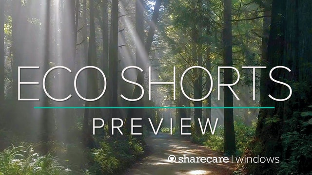 "Eco Shorts Preview: ""Shinrin-Yoku (forest bathing)"""
