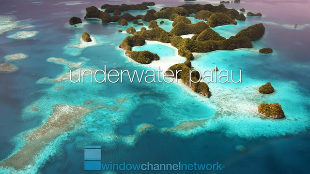 Underwater Palau natural relaxation