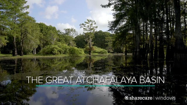 The Great Atchafalaya Basin