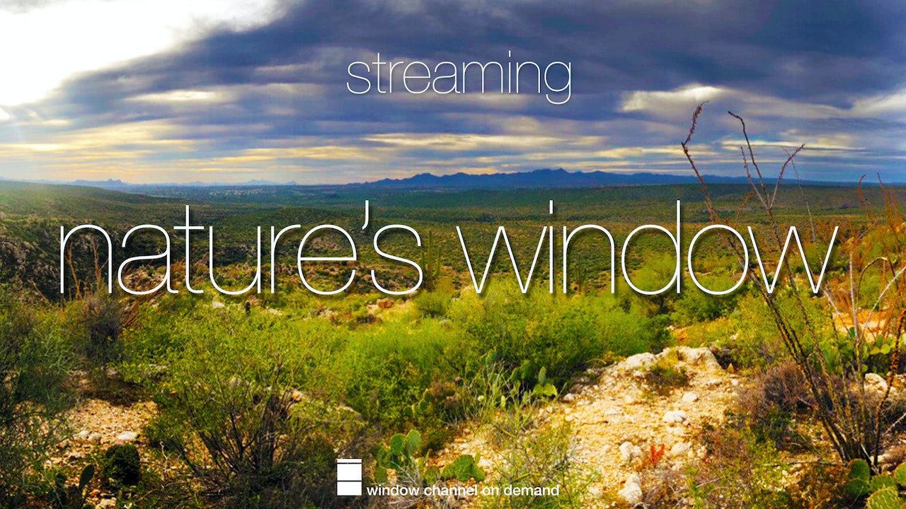 Nature's Window Streaming