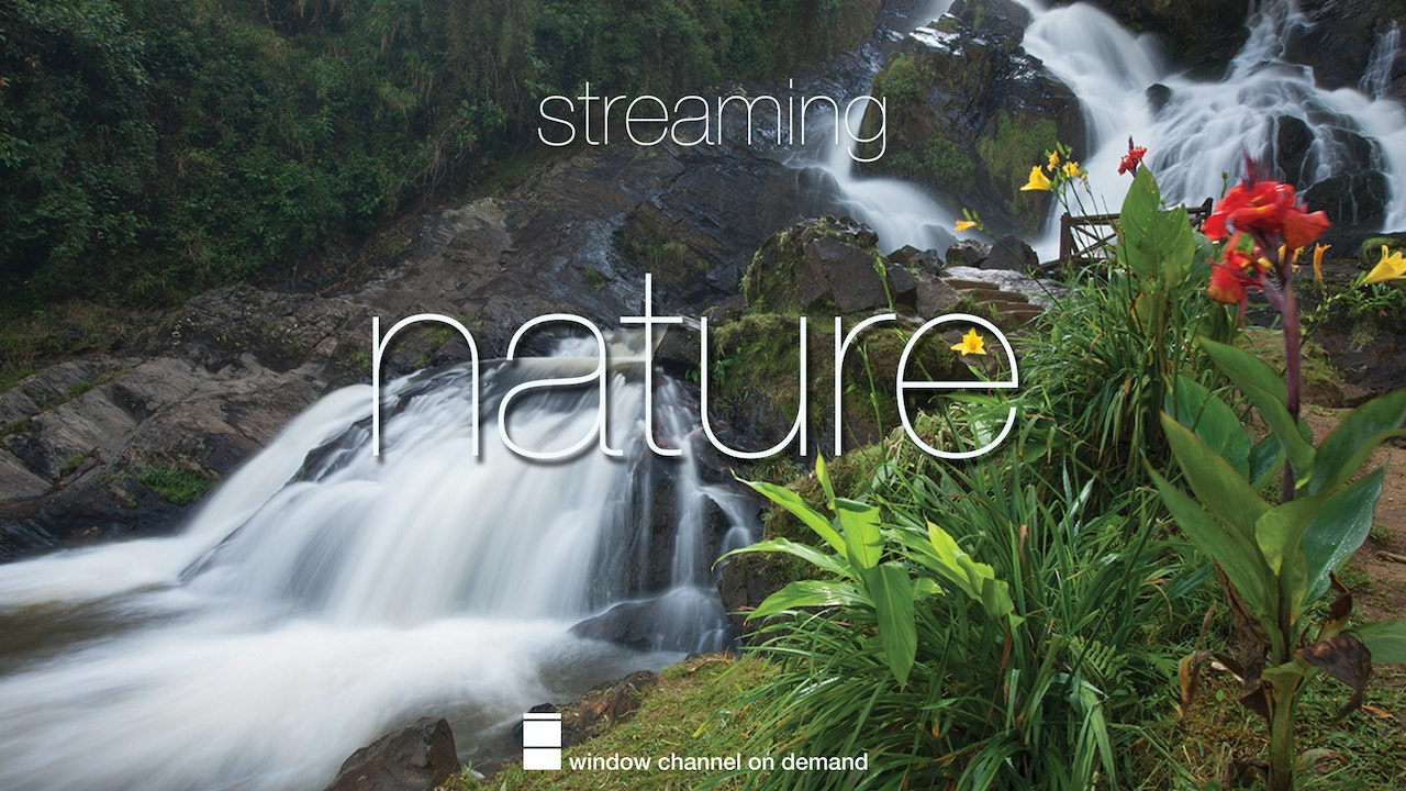 Nature Streaming