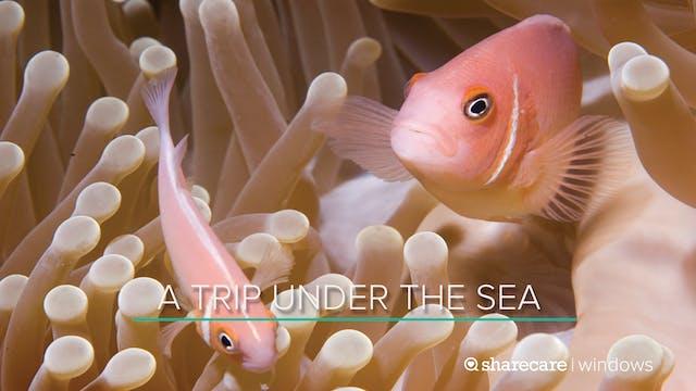 A Trip Under The Sea