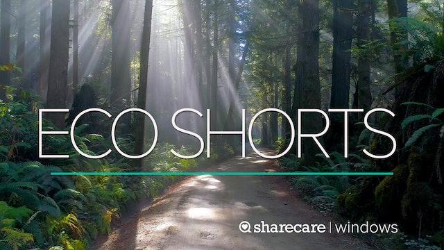 Eco Shorts