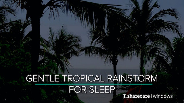 9 Hours of Gentle Tropical Rainstorm for Sleep (Ultra Low Light)