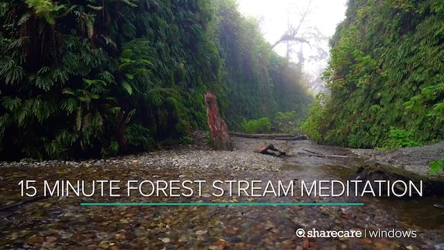 15 Minute Forest Stream Meditation