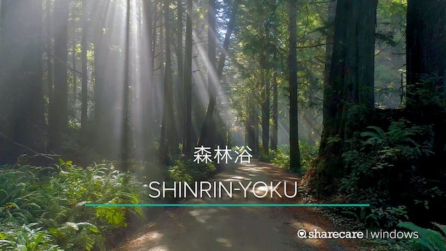 One Hour of Shinrin-Yoku (Forest Bathing)