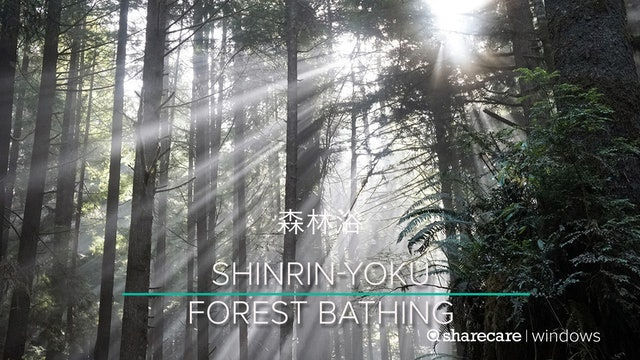 Shinrin Yoku (Forest Bathing) 6-minutes