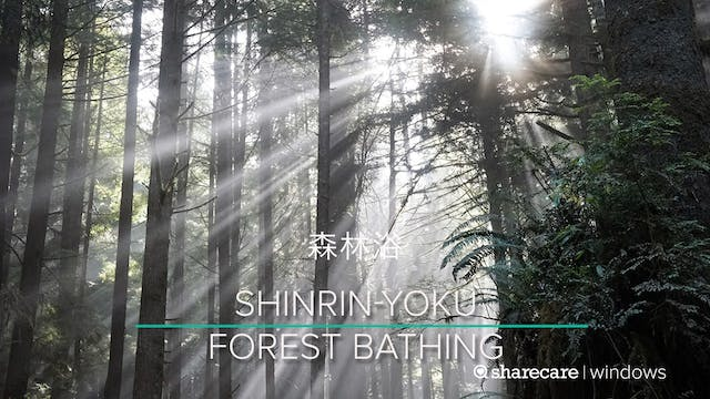 Shinrin-Yoku (Forest Bathing) 6 Minutes