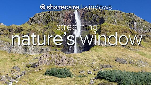 Nature's Window Streaming