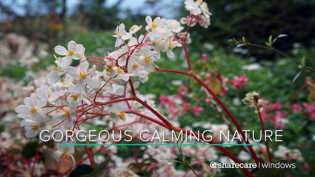 One Hour of Gorgeous, Calming Nature