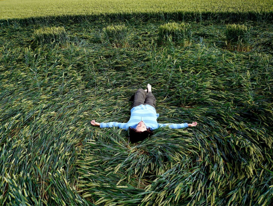 Crop Circle Update: The Wake Up Call