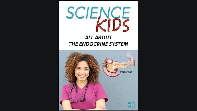 Science Kids - All About The Endocrine Systems