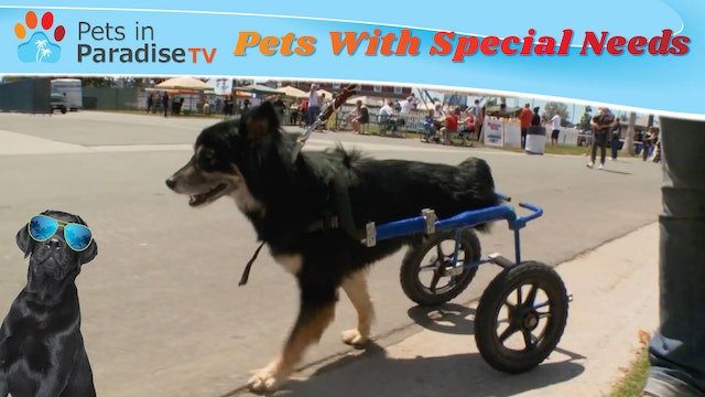 Pets With Special Needs