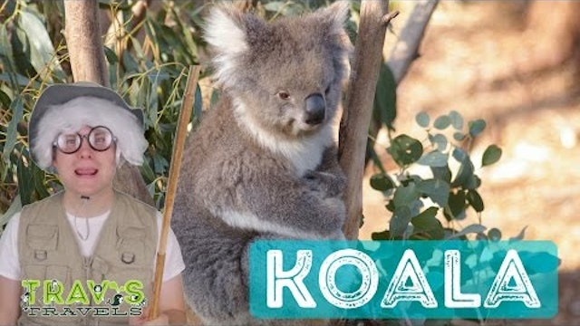 Koala - Animal Facts