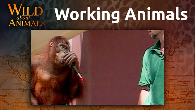 Working Animals
