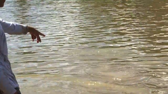 8 Foot Alligator Gar!