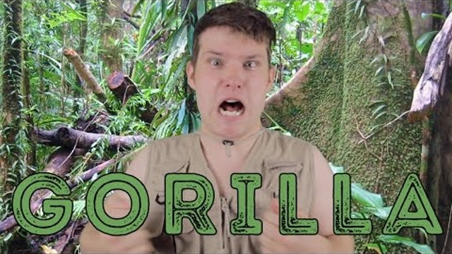 Western Lowland Gorilla - Animal Facts