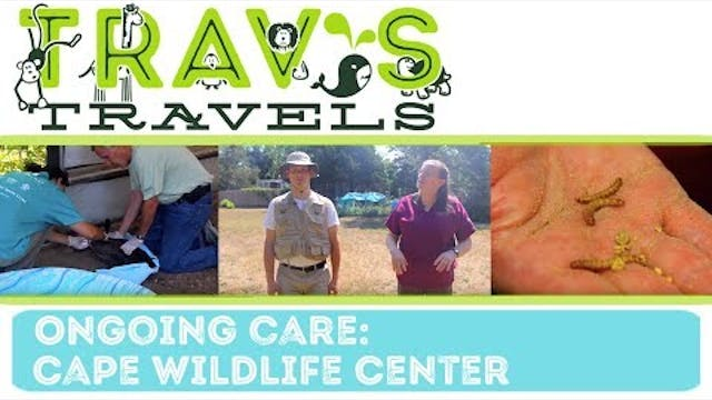 Cape Wildlife Center- Ongoing Care
