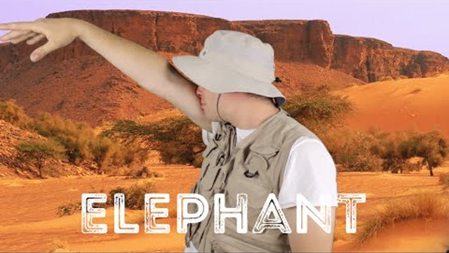 Elephant - Animal Facts