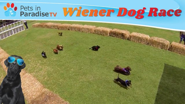 Wiener Dog Race