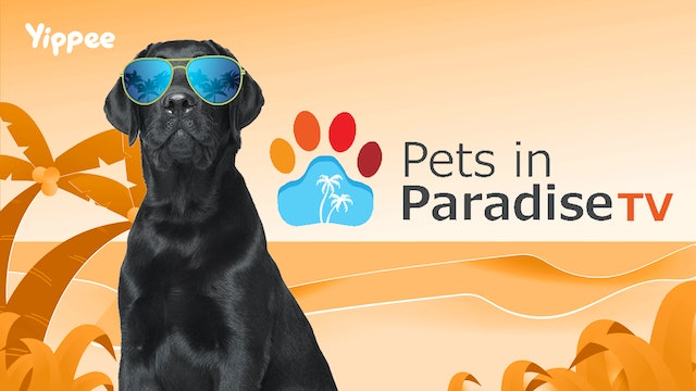 Pets in Paradise TV