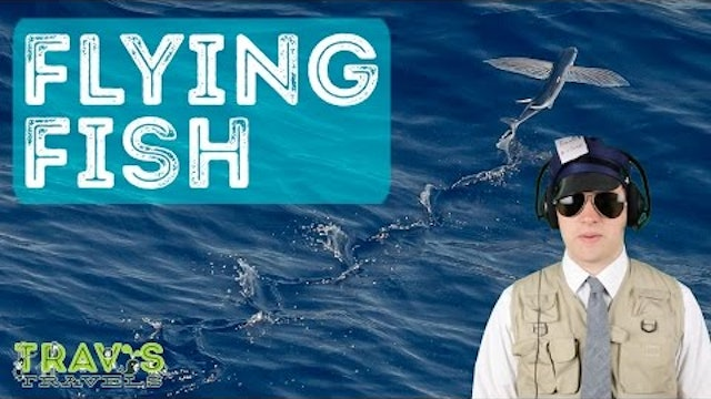 Flying Fish - Animal Facts
